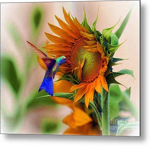John+kolenberg Metal Print featuring the photograph Hummingbird On Sunflower by John Kolenberg