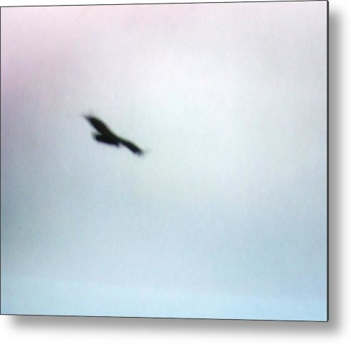 Hawk Metal Print featuring the photograph The Hawk by Rana Adamchick