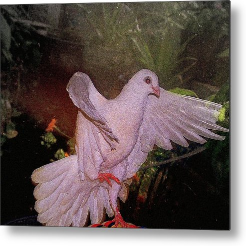 Dove Metal Print featuring the mixed media The Dance by YoMamaBird Rhonda