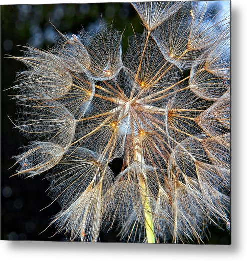 Weed Metal Print featuring the photograph The Inner Weed by Steve Harrington