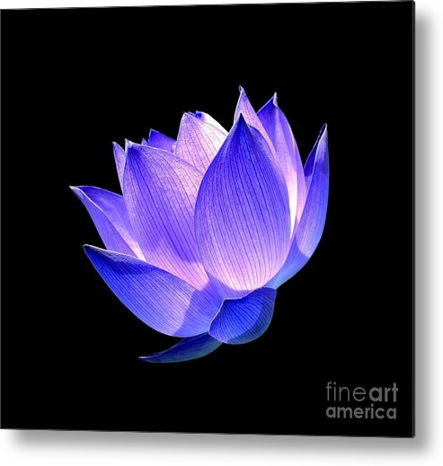 Flower Metal Print featuring the photograph Enlightened by Jacky Gerritsen