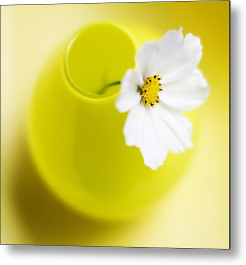 Yellow Metal Print featuring the photograph Little Yellow Vase by Rebecca Cozart
