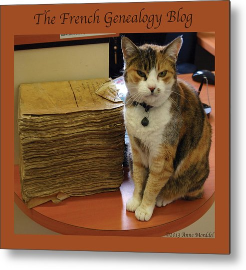Cats Metal Print featuring the photograph Archives Cat With Fgb Border by A Morddel