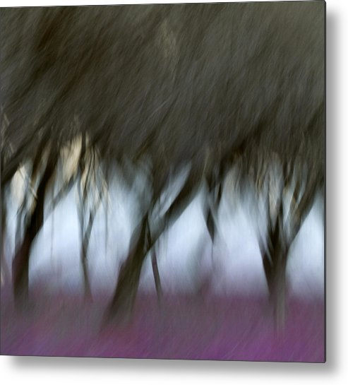 Orchard Metal Print featuring the photograph Orchard In Springtime by Carol Leigh