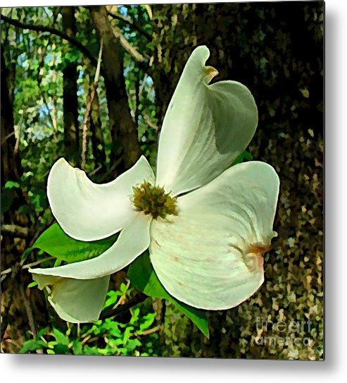 Dogwood Blossom Metal Print featuring the photograph Dogwood Blossom II by Julie Dant
