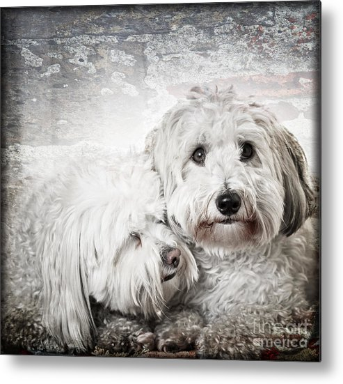 Dogs Metal Print featuring the photograph Together by Elena Elisseeva