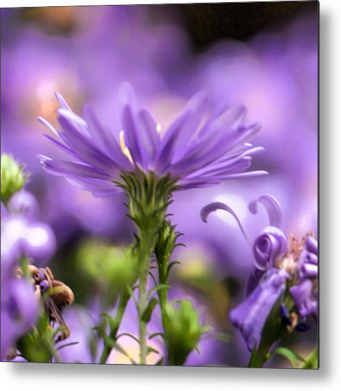 Flower Metal Print featuring the photograph Soft Lilac by Leif Sohlman