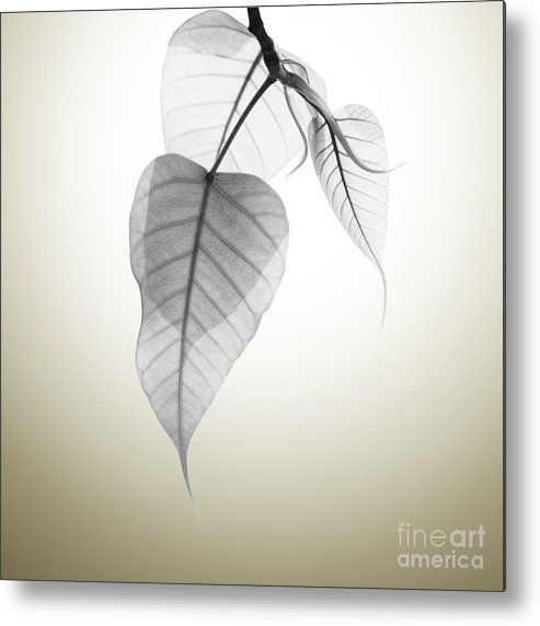 Abstract Metal Print featuring the photograph Pho Or Bodhi by Atiketta Sangasaeng