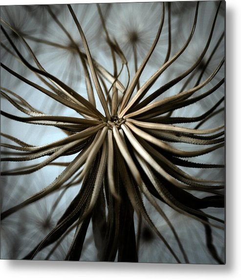 Abstract Metal Print featuring the photograph Dandelion by Stelios Kleanthous