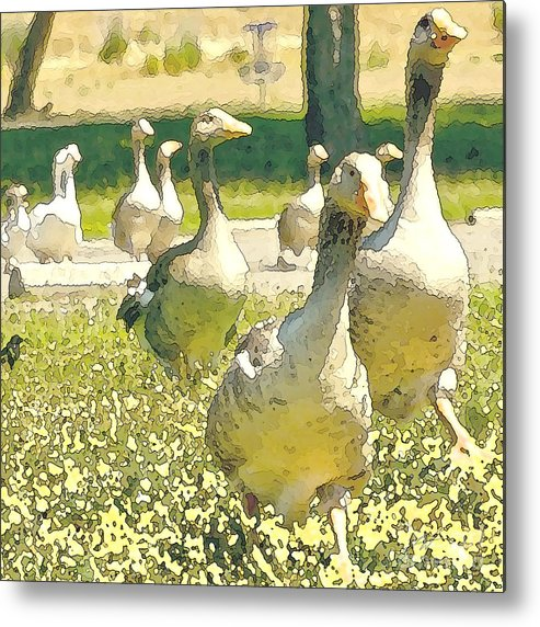 Flock Of Geese Metal Print featuring the digital art Duck Duck Goose by Artist and Photographer Laura Wrede