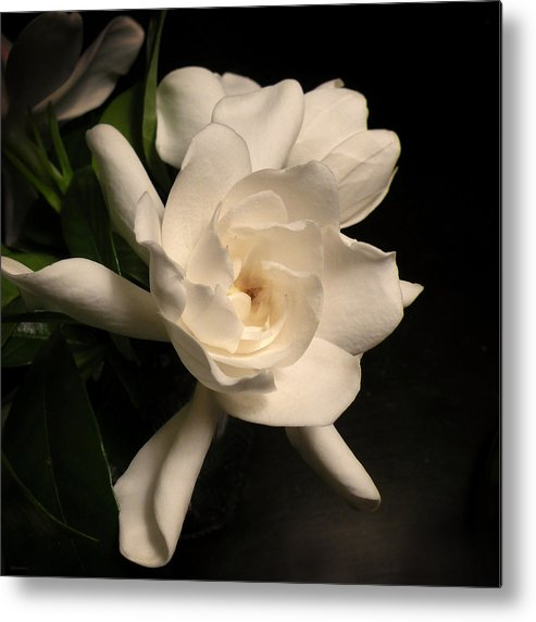 Flower Metal Print featuring the photograph Gardenia Blossom by Deborah Smith