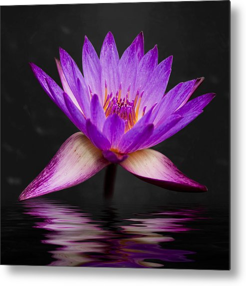 3scape Photos Metal Print featuring the photograph Lotus by Adam Romanowicz