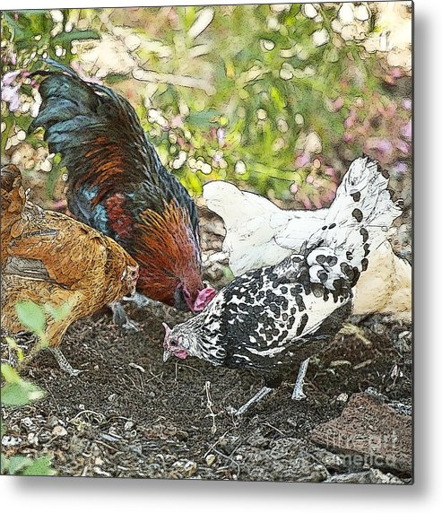 Rooster Art Metal Print featuring the painting Mr. Rooster And All The Chickens Scratching For A Snack by Artist and Photographer Laura Wrede