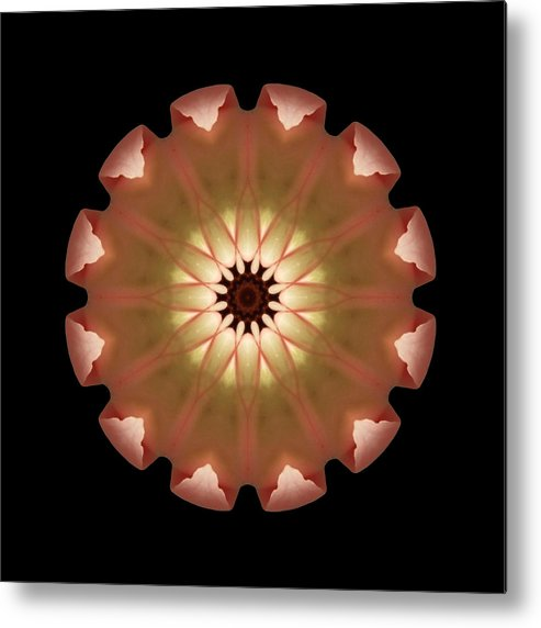 Flower Metal Print featuring the photograph Pale Pink Tulip Flower Mandala by David J Bookbinder