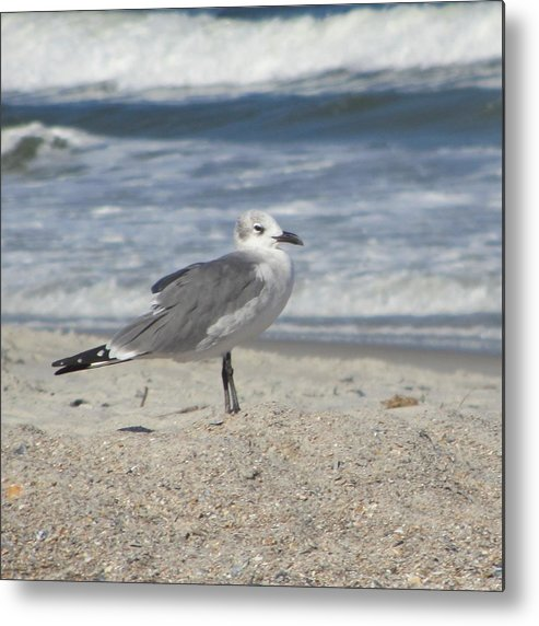 Sea Metal Print featuring the photograph Seagulls At Fernandina 2 by Cathy Lindsey
