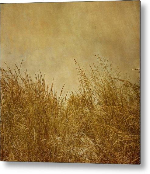 Beach Metal Print featuring the photograph Solitude by Kim Hojnacki