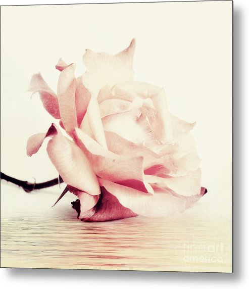 Rose Metal Print featuring the photograph Lucid by Priska Wettstein