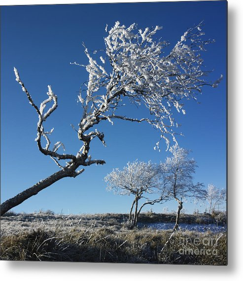 Bare Tree Metal Print featuring the photograph Winter Tree. by Bernard Jaubert