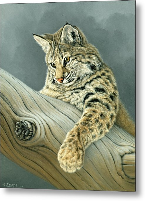 Wildlife Metal Print featuring the painting Curiosity - Young Bobcat by Paul Krapf