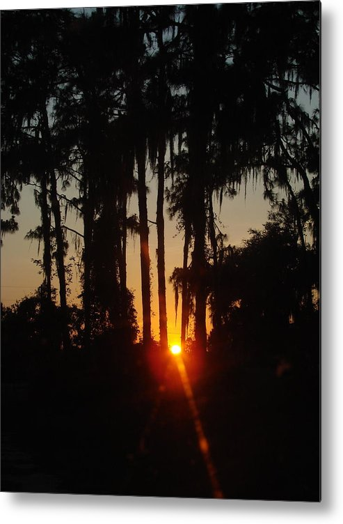 Sunset Metal Print featuring the photograph Sunset In The Woods by Kimberly Camacho