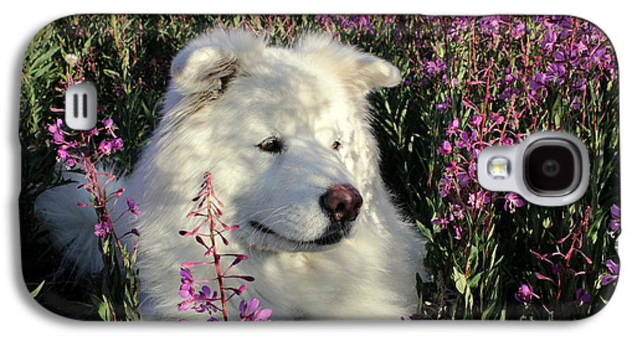 Samoyed Galaxy S4 Case featuring the photograph Shadows by Fiona Kennard