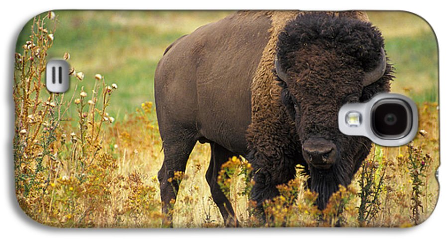 National Parks Service Galaxy S4 Case featuring the digital art Bison Buffalo by National Parks Service