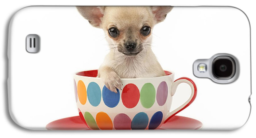 Chihuahua Galaxy S4 Case featuring the digital art Chihuahua In Cup Dp684 by Greg Cuddiford