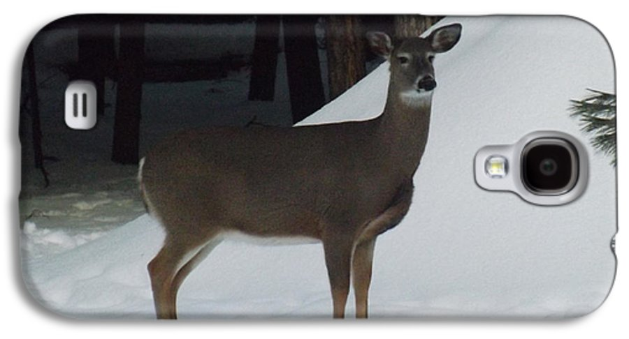Wildlife Galaxy S4 Case featuring the photograph Doe A Deer by Brenda Brown