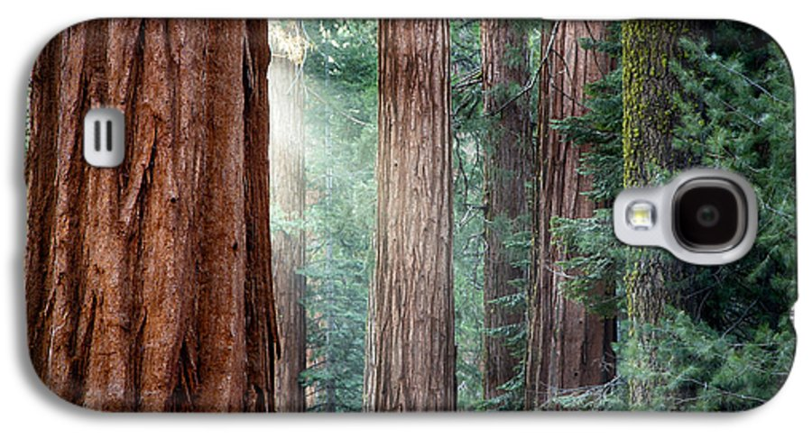 Ancient Galaxy S4 Case featuring the photograph Giant Sequoias In Early Morning Light by Jane Rix