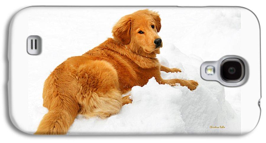 Golden Retriever Galaxy S4 Case featuring the photograph Golden Retriever Snowball by Christina Rollo