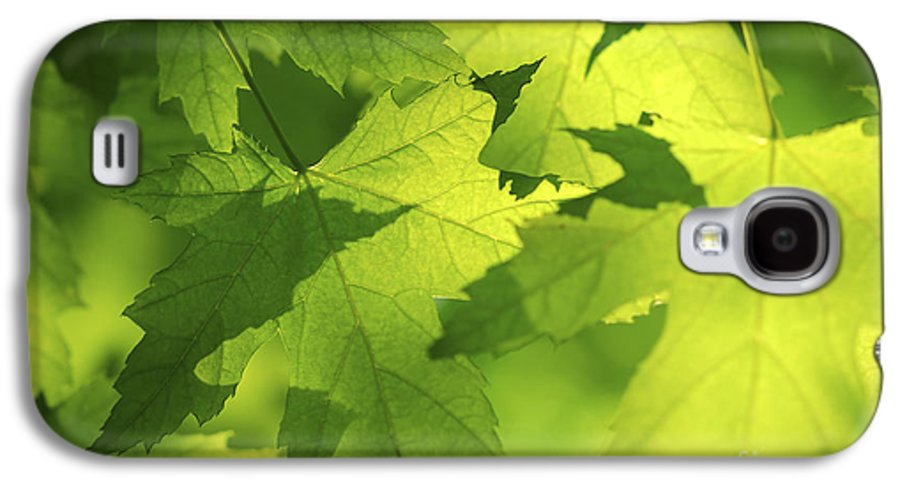 Leaf Galaxy S4 Case featuring the photograph Green Maple Leaves by Elena Elisseeva
