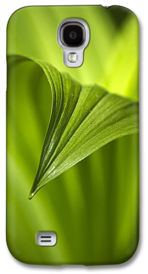 Nature Galaxy S4 Case featuring the photograph Nature Unfurls by Christina Rollo