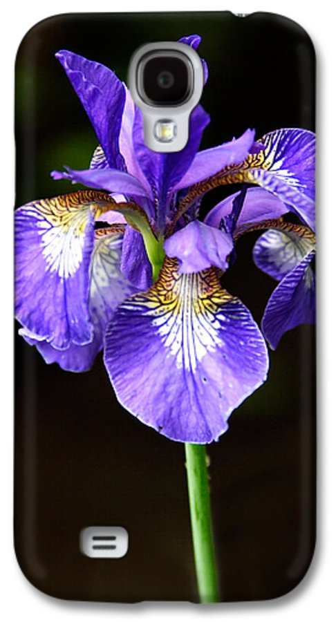 3scape Photos Galaxy S4 Case featuring the photograph Purple Iris by Adam Romanowicz