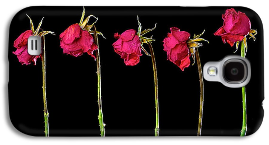 Art Galaxy S4 Case featuring the pyrography Rose Lineup by Mauro Celotti