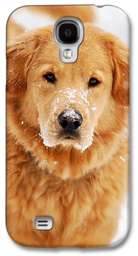 Snowy Galaxy S4 Case featuring the photograph Snowy Golden Retriever by Christina Rollo