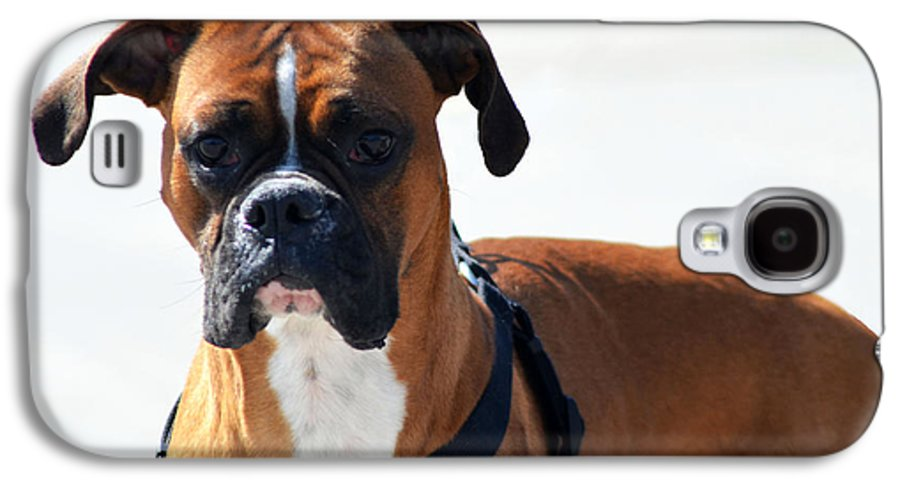 Boxer Galaxy S4 Case featuring the photograph The Challenge by Camille Lopez