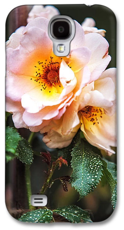 Rose Galaxy S4 Case featuring the photograph The Rose With Your Name. Park Of De Haar Castle by Jenny Rainbow