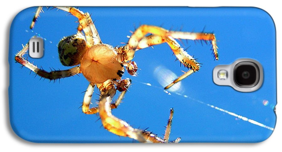 Trapeze Galaxy S4 Case featuring the photograph Trapeze Spider by Christina Rollo