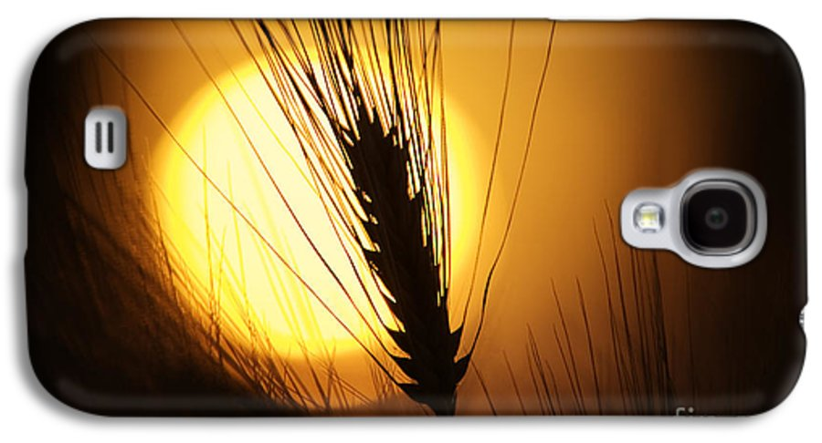 Sunset Galaxy S4 Case featuring the photograph Wheat At Sunset by Tim Gainey