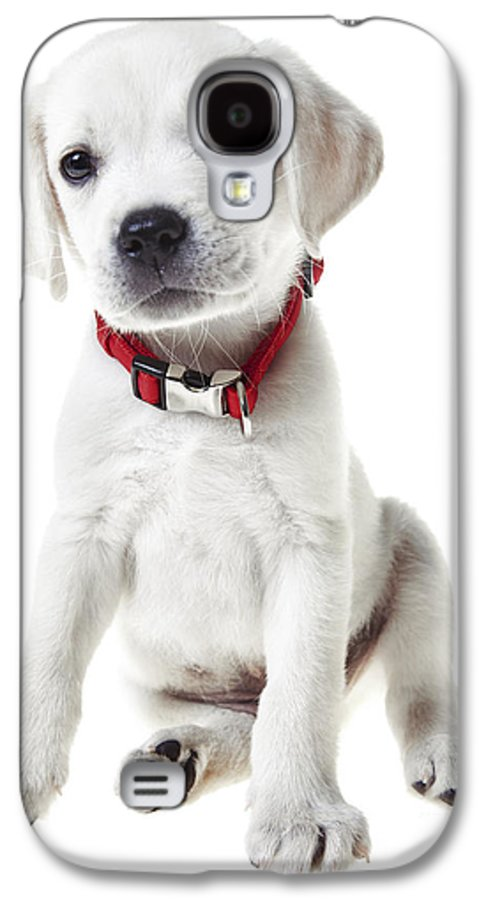 Puppy Galaxy S4 Case featuring the photograph Yellow Lab Puppy by Diane Diederich