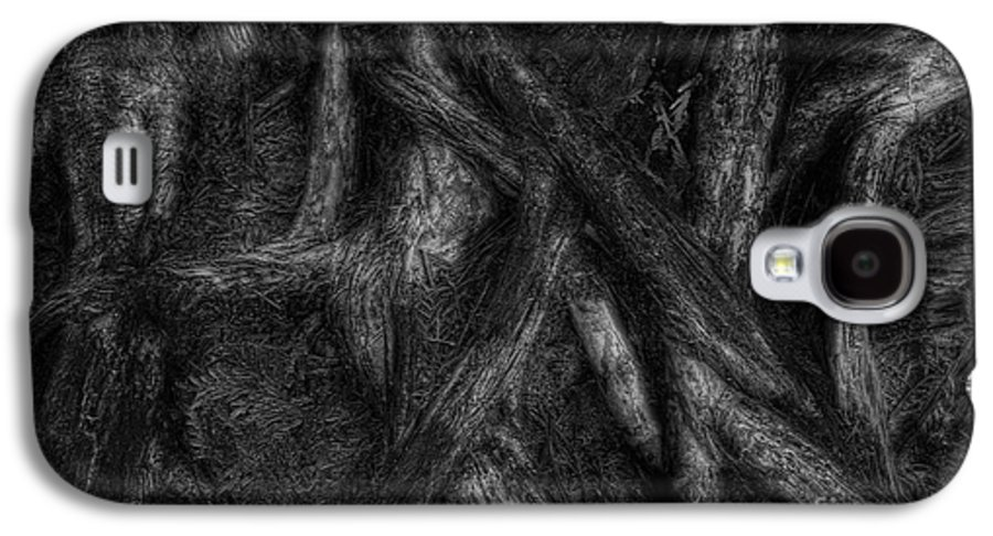 Old Galaxy S4 Case featuring the photograph Old Silvery Roots by David Gordon
