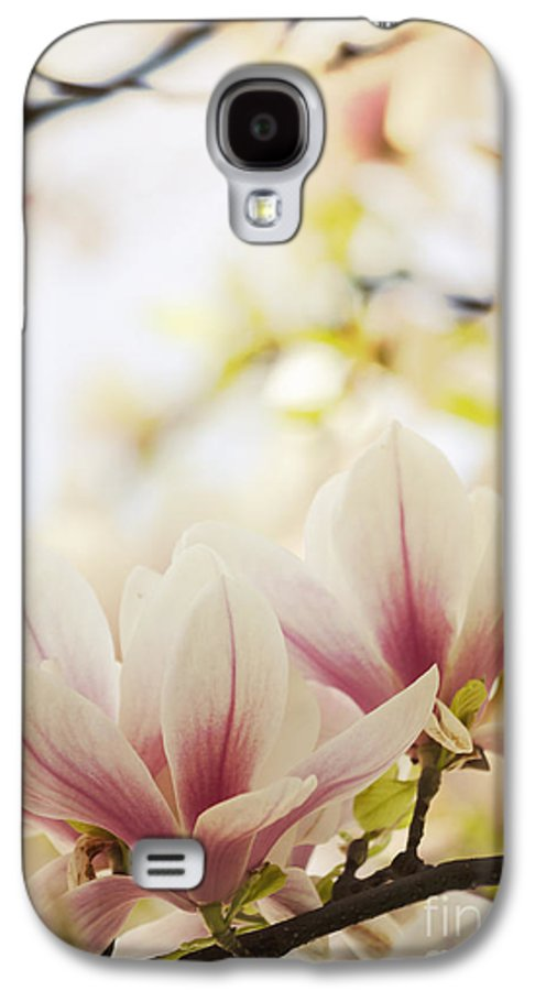Magnolia Galaxy S4 Case featuring the photograph Magnolia by Jelena Jovanovic