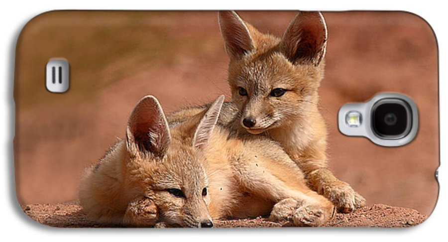 Fox Galaxy S4 Case featuring the photograph Kit Fox Pups On A Lazy Day by Max Allen