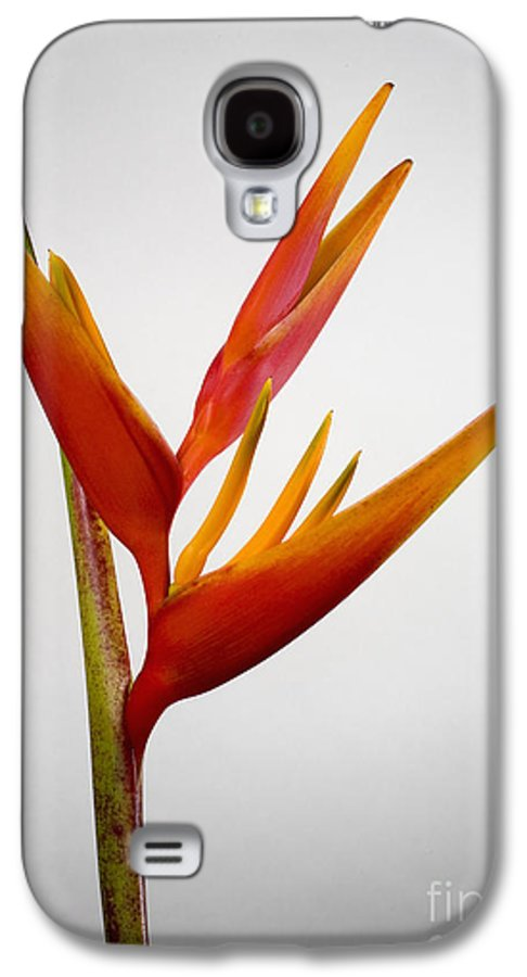 Botanical Galaxy S4 Case featuring the photograph Red Heliconia by Tomas del Amo - Printscapes