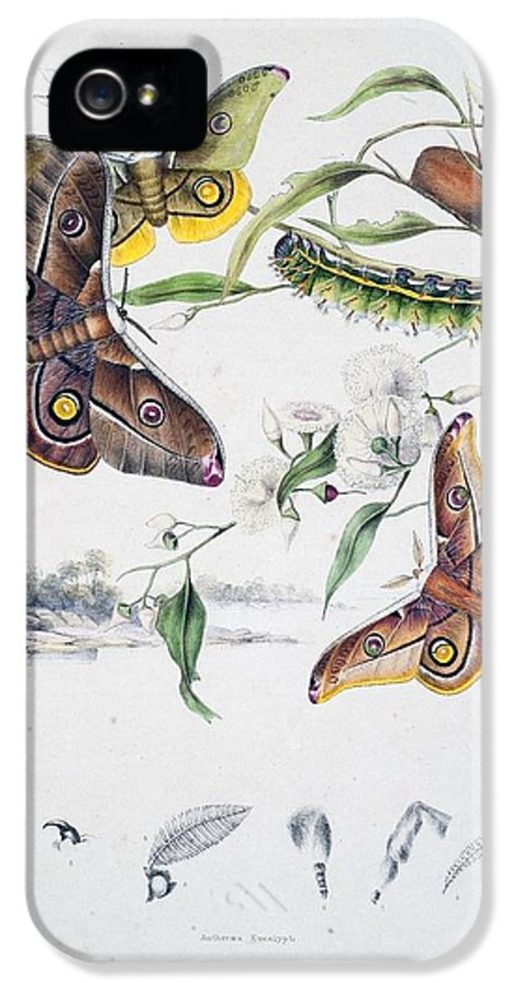 Butterflies IPhone 5 / 5s Case featuring the painting Australian Butterflies by Philip Ralley