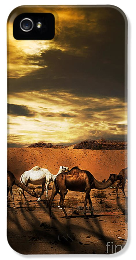 Camel IPhone 5 / 5s Case featuring the pyrography Camels by Jelena Jovanovic
