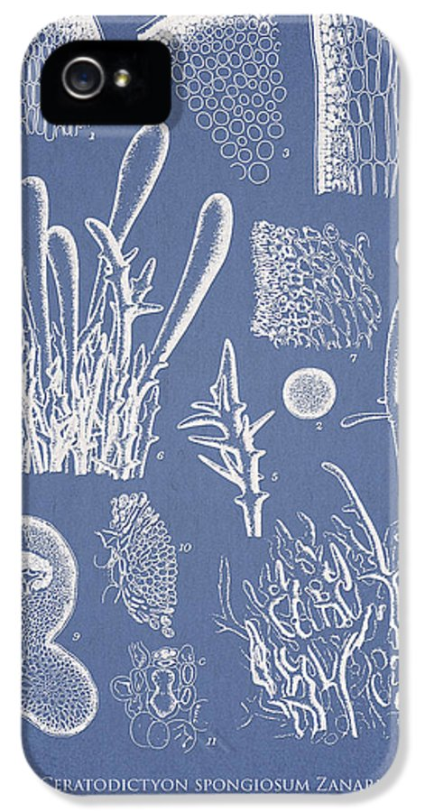 Algae IPhone 5 / 5s Case featuring the drawing Ceratodictyon Spongiosum Zanard by Aged Pixel