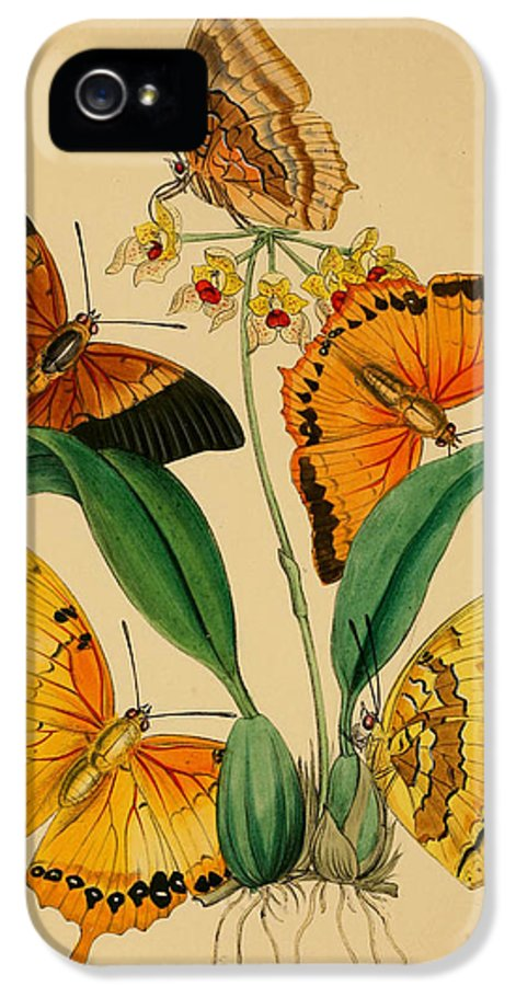 Chinese IPhone 5 / 5s Case featuring the painting Chinese Butterflies 1847 by Philip Ralley