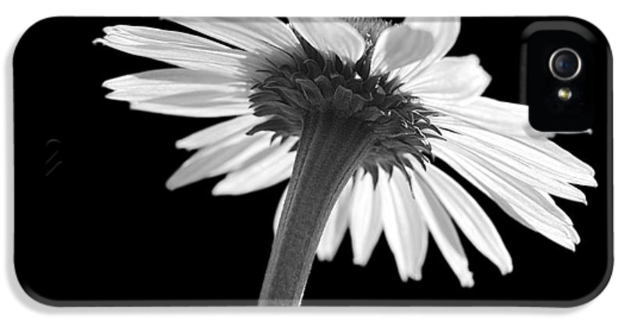 Echinacea IPhone 5 / 5s Case featuring the photograph Coneflower by Tony Cordoza