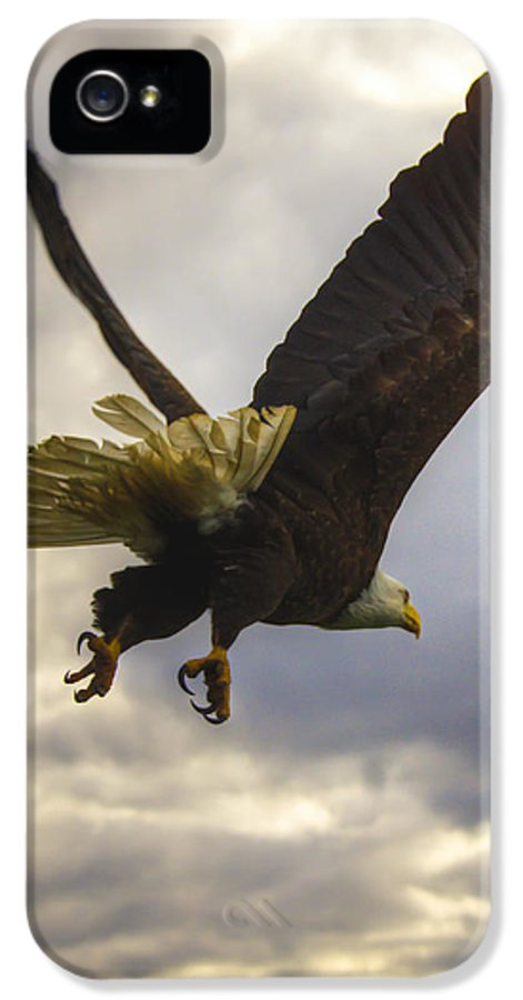 Great American Bald Eagle IPhone 5 / 5s Case featuring the photograph Great American Bald Eagle In Flight Homer Alaska by Natasha Bishop